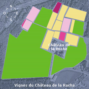 Vignes du Château de La Roche en Loire